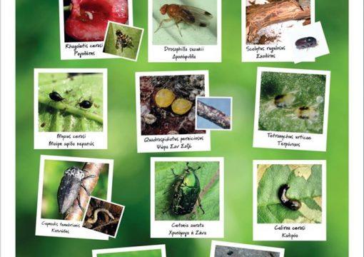 Κύριοι εντομολογικοί εχθροί της κερασιάς