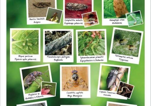 Κύριοι εντομολογικοί εχθροί της ροδακινιας