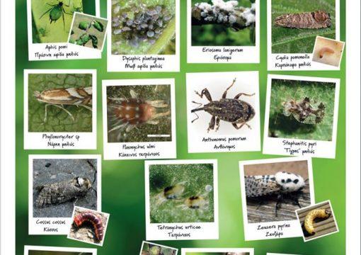 Κύριοι εντομολογικοί εχθροί της μηλιάς